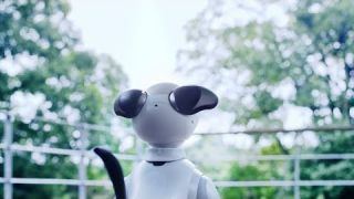 New story with aibo